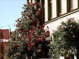 萊茵哈德酒店