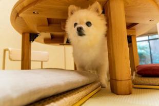 一條花梨旅館Ichijo Karin